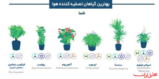 بهترین گیاهان آپارتمانی تصفیه کننده هوا
