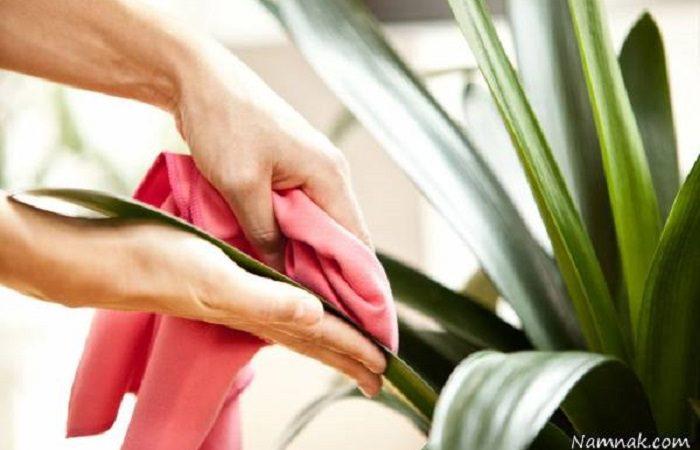 چگونه برگ های گیاهان را تمیز کنیم؟