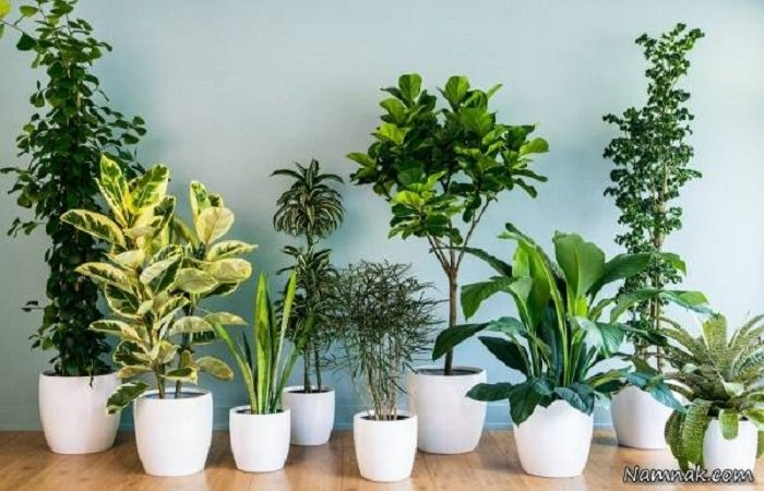 نگهداری گل و گیاه در تابستان