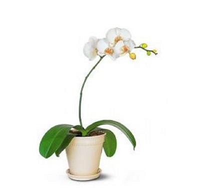 طریقه نگهداری گل ارکیده